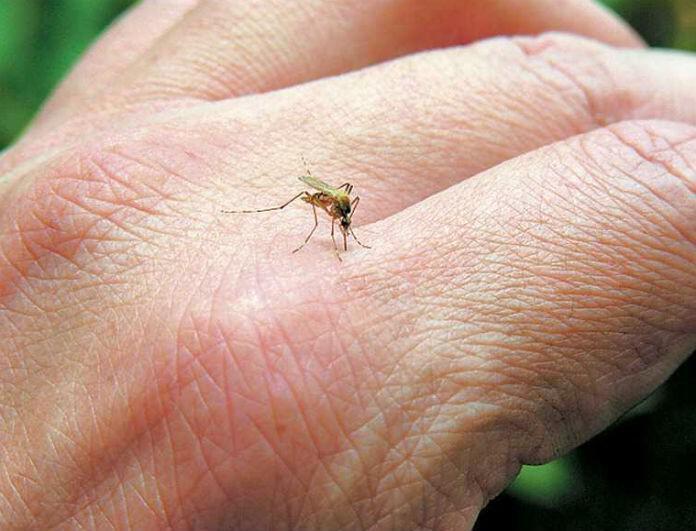 Κουνούπια: Πως να κρατήσεις μακριά τα ενοχλητικά έντομα!