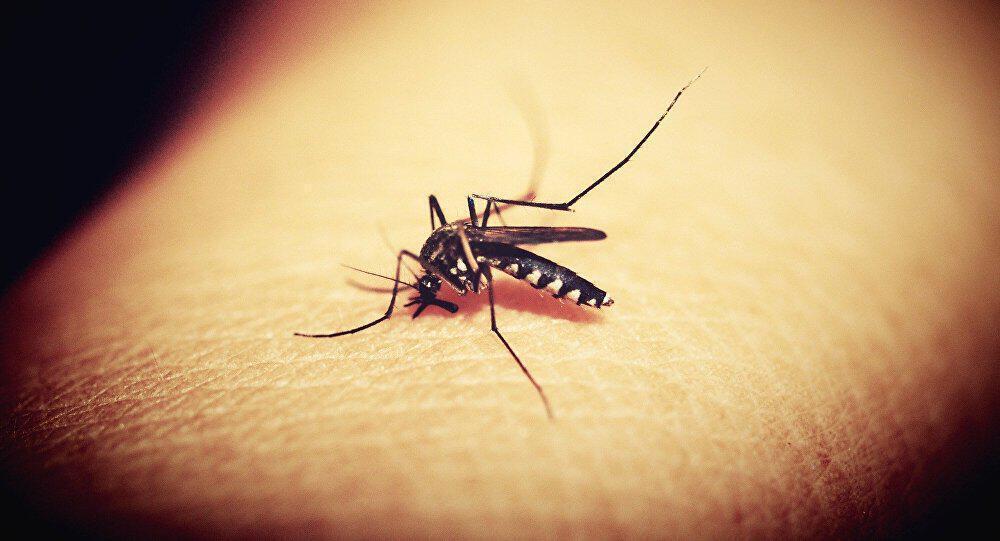 Χτύπησε ξανά στην Ελλάδα ο ιός του Δυτικού Νείλου – Τα δύο πρώτα περιστατικά